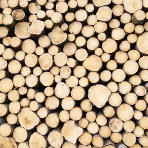 Okrasné dreviny | Farmárske produkty | Paulen